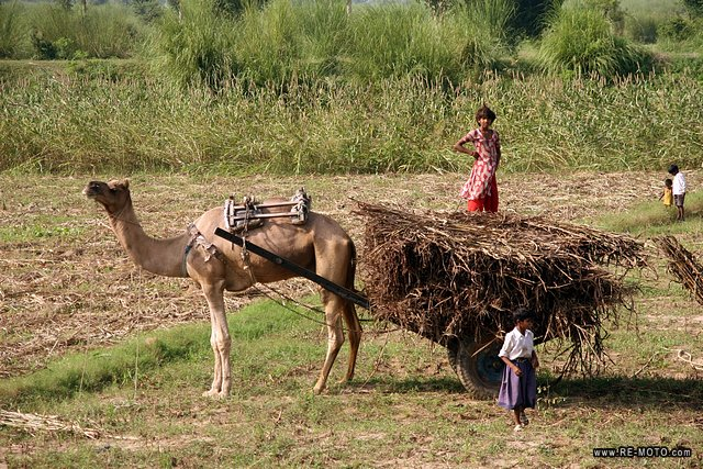 In India there is not a single space of deserted land.